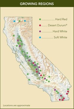 California map showing classes of wheat grown in the state
